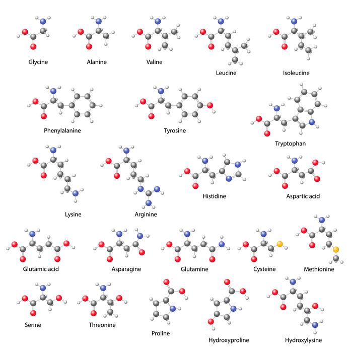 Amino acids -  main structural chemical formulas
